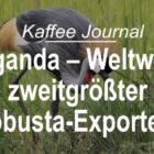 Uganda – Weltweit zweitgrößter Robusta-Exporteur